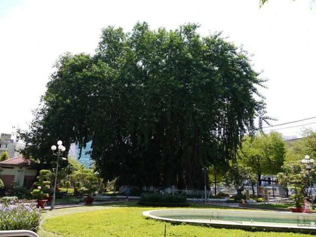 ホーチミンの公園