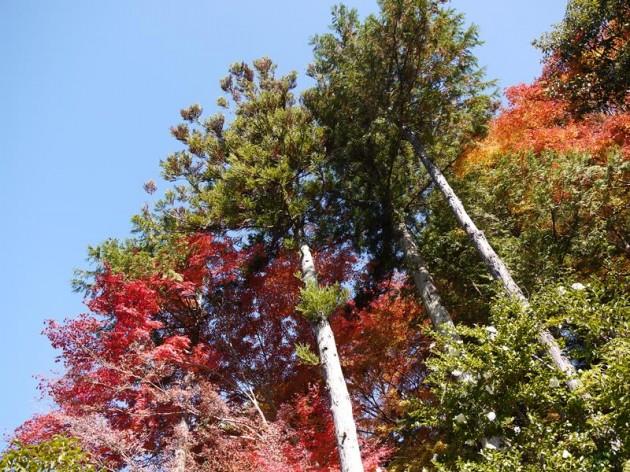 まっすぐ伸びてる木