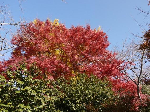 曼珠院の紅葉